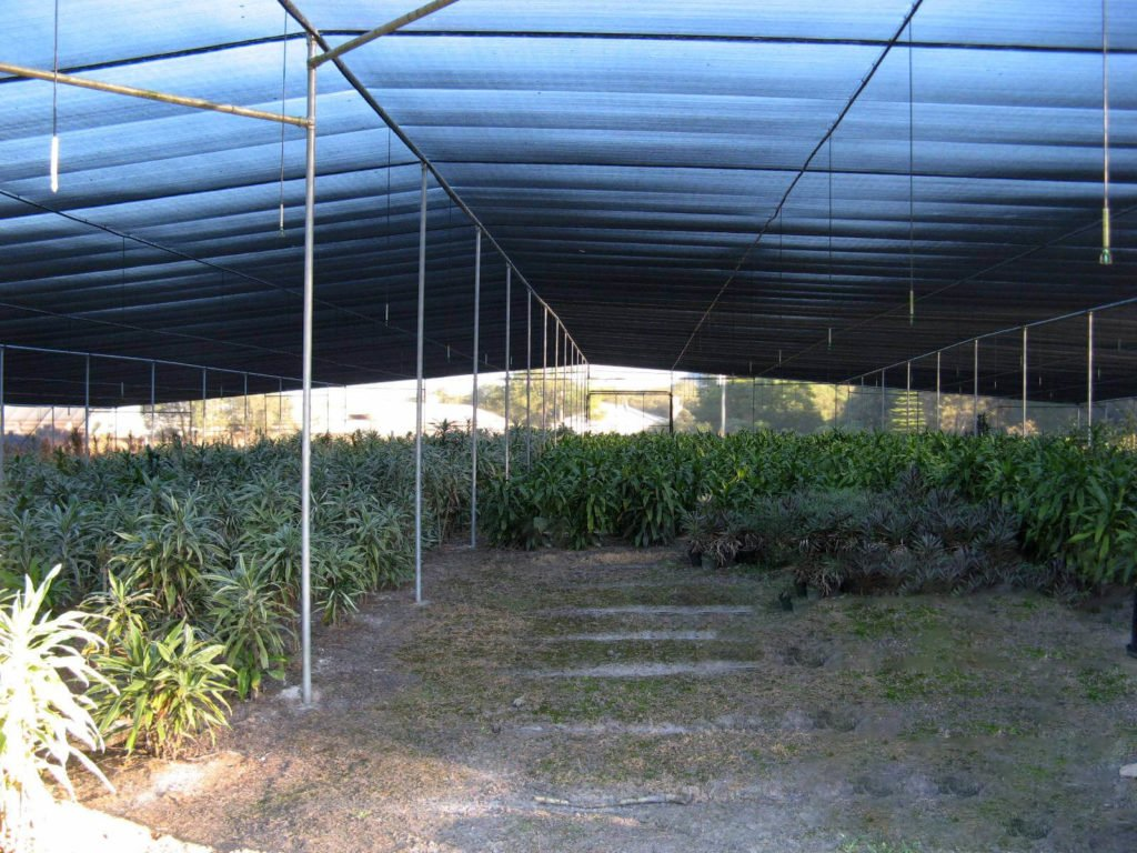 Wide Span Shadehouse Greenhouse