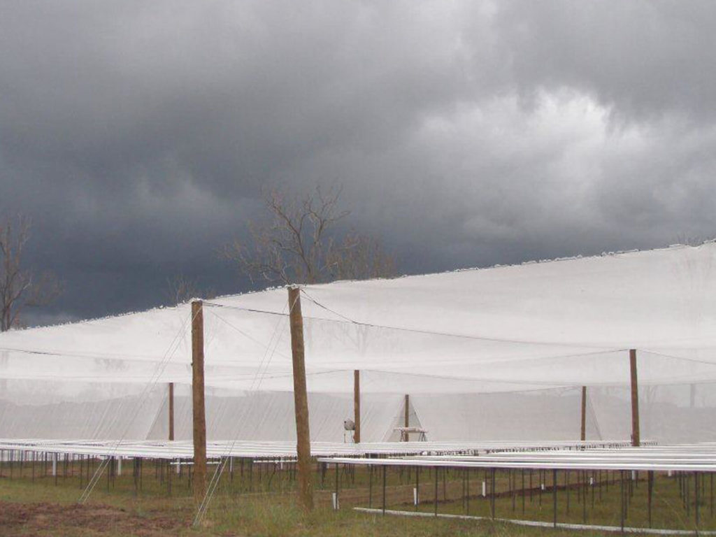 Hail Guard Netting Cover