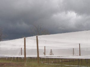 Hail Guard Netting Cover